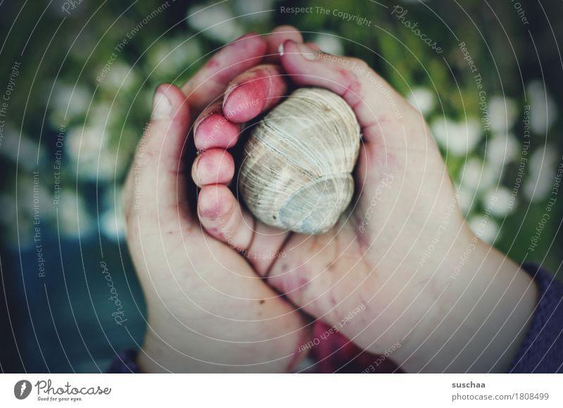 kinderhände III Kind Hand Finger dreckig abenteuerlust entdecken berühren ansehen erleben festhalten behüten Schnecke Schneckenhaus Zuhause bewohnt Kindheit
