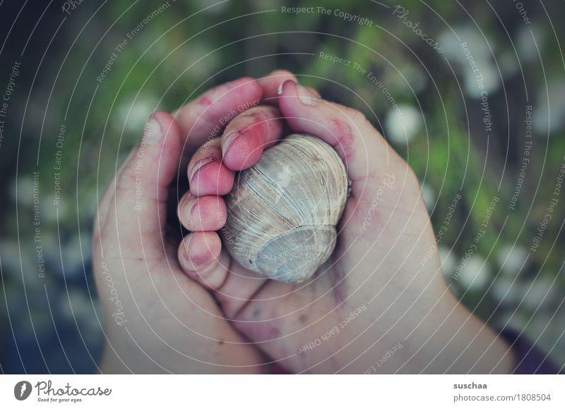 kinderhände IV Kind Hand Finger dreckig abenteuerlust entdecken berühren ansehen behutsam erleben festhalten Schnecke Schneckenhaus Zuhause bewohnt Kindheit