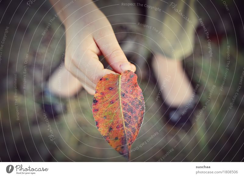 kinderhände VI Kind Hand Finger festhalten Blick Blatt Herbst Sommer Außenaufnahme Natur entdecken Fuß Herbstlaub natürlich Kindheit Kindererziehung