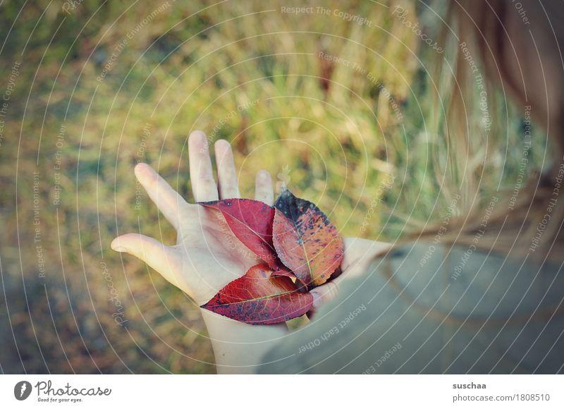 kinderhände V Hand Finger Kind Haare & Frisuren Mädchen Außenaufnahme Sommer Wiese Herbst Blatt Natur Blick entdecken festhalten Kindheit natürlich