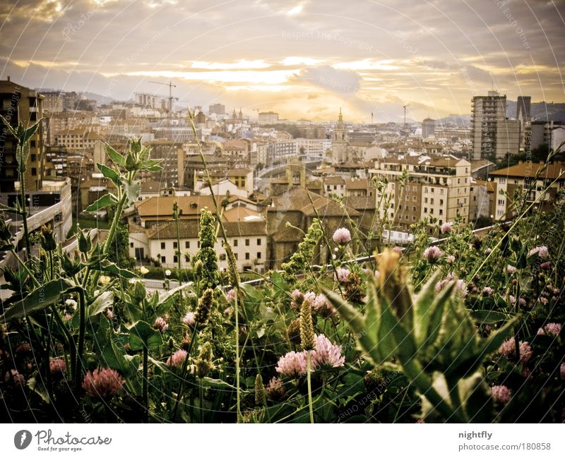 sunset el encarnacion Natur Himmel Blume Stadt Pflanze Sommer Blatt Haus Wolken Spanien Erholung Wiese Blüte Gras Park Wärme
