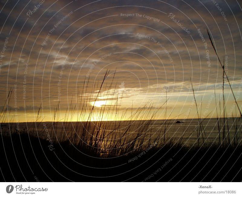 Sunset / Bretagne Meer Wolken gelb Farbe Gras