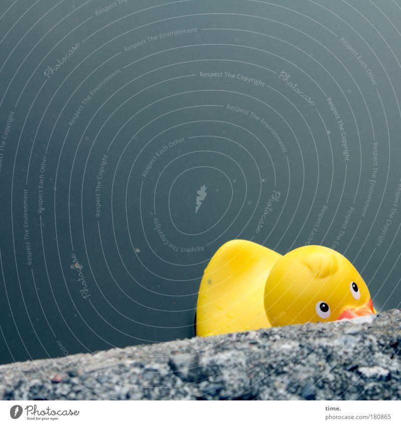 Wo bleibt Ernie? Blick Meer Seeufer Flussufer Teich Mauer Wand Spielzeug Badeente gelb Angst Ente Am Rand Befestigung Im Wasser treiben unsicher Hilfsbedürftig