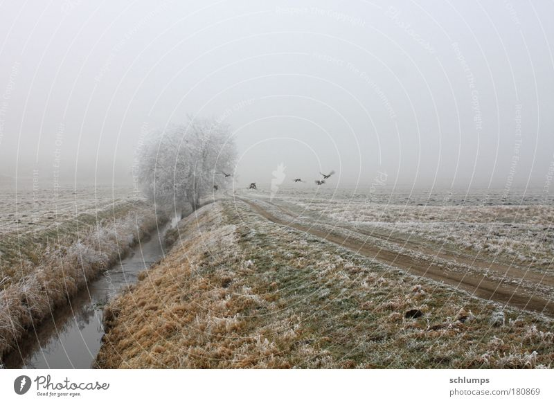 flucht Farbfoto Außenaufnahme Morgen Natur Landschaft Tier Wasser Winter Nebel Baum Feld Wildtier Tiergruppe Mecklenburg-Vorpommern Traurigkeit
