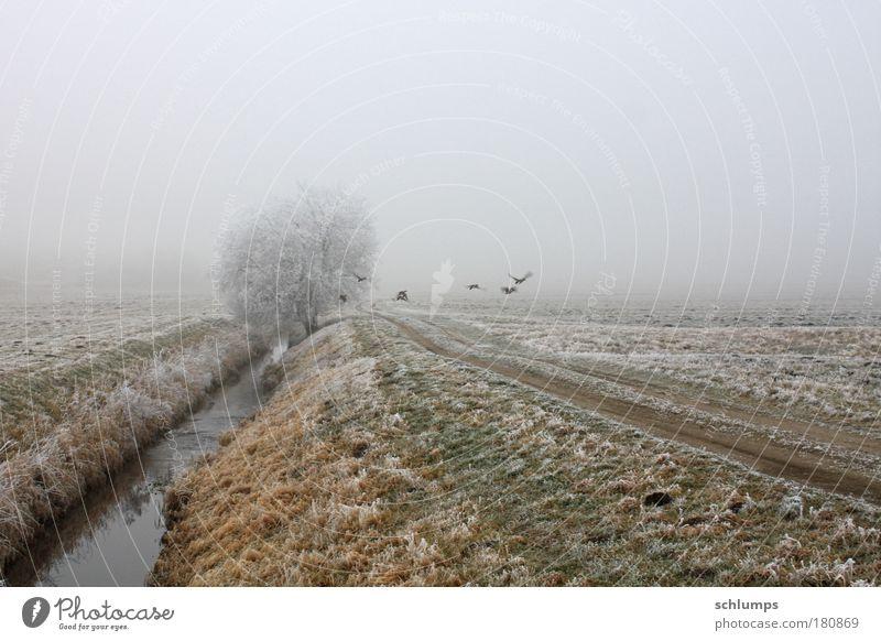 flucht Natur Wasser Baum Winter Tier Traurigkeit Landschaft Feld Nebel Tiergruppe Wildtier Mecklenburg-Vorpommern