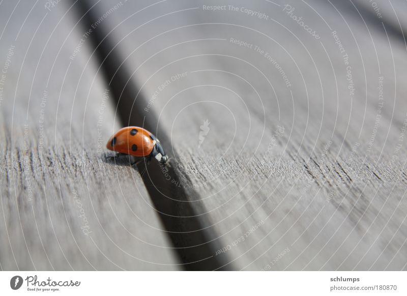 holz-weg Natur Tier Holz Bewegung Stimmung Käfer krabbeln fleißig Tatkraft