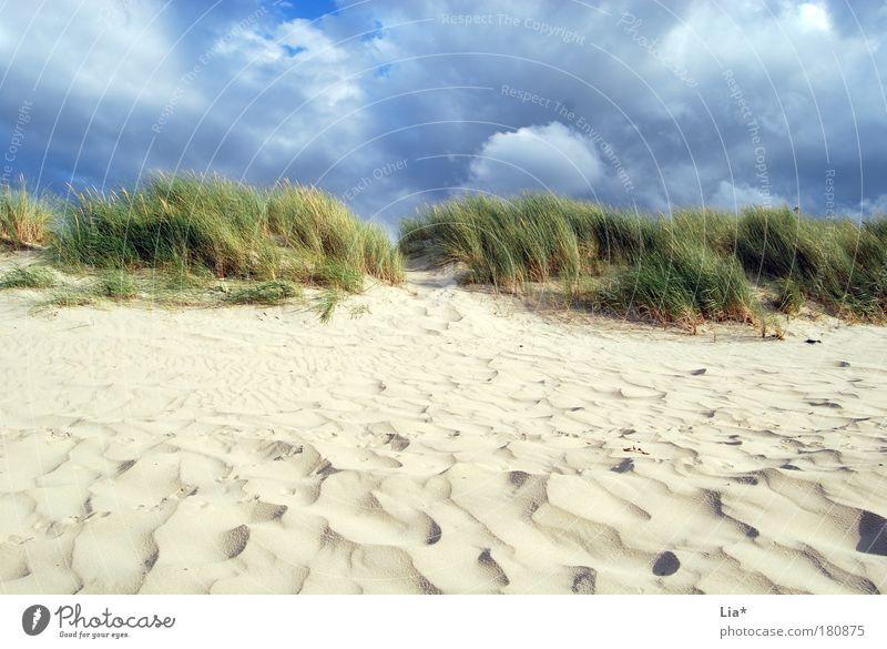 ich will wieder an die Nordsee Ferien & Urlaub & Reisen Strand Meer Umwelt Natur Sand Wolken Wind Gras Dünengras Stranddüne Erholung Landschaftsformen