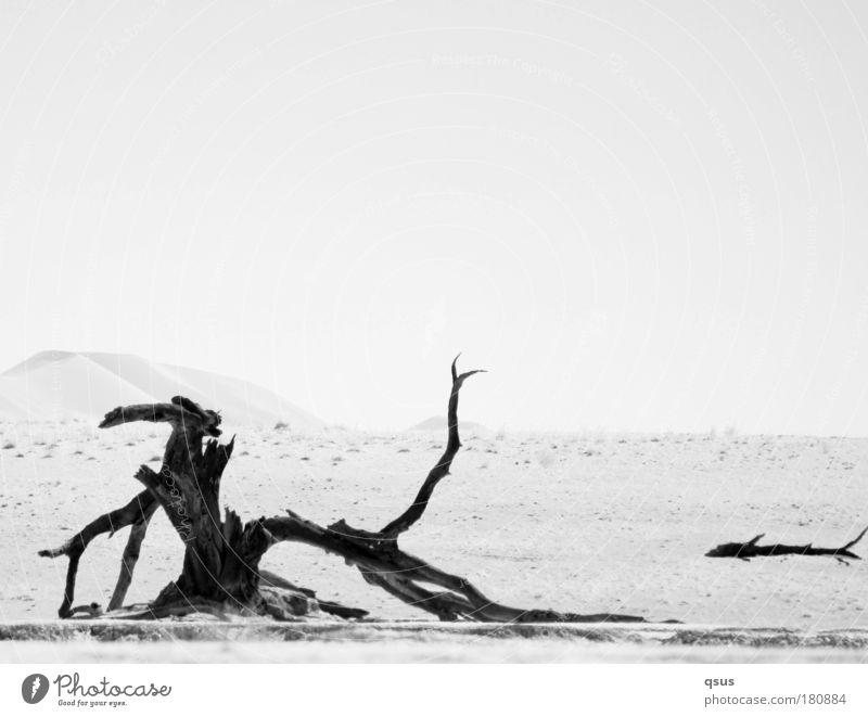 Holz Himmel Natur Baum Pflanze ruhig Einsamkeit Landschaft Umwelt Sand Erde Wüste Hügel Vergänglichkeit Düne Fernweh Schwarzweißfoto