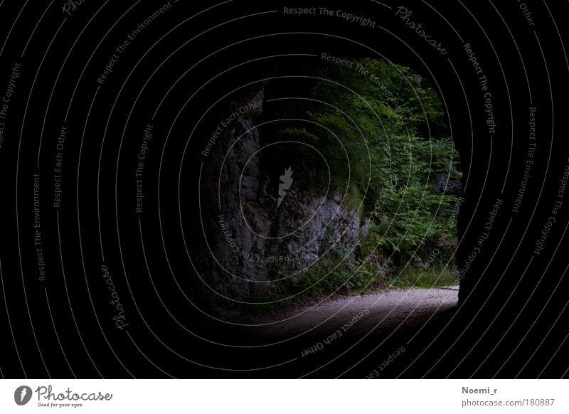 Tunnelblick Natur grün Baum schwarz ruhig Wald Straße Berge u. Gebirge grau Stimmung Schweiz Wahrheit