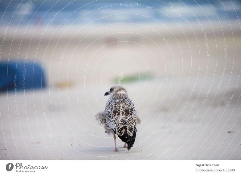 HAGE, MÖWN! ...MAUWOOF HIER Meer Strand Ferien & Urlaub & Reisen Tier Erholung Sand Vogel Deutschland Wind Pause Feder Möwe Nordsee Brandung Strandkorb wehen