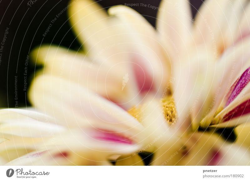 Vorgarten IV Natur schön weiß Blume Pflanze Freude Gefühle Glück Park Landschaft Zufriedenheit Stimmung rosa elegant Umwelt Fröhlichkeit