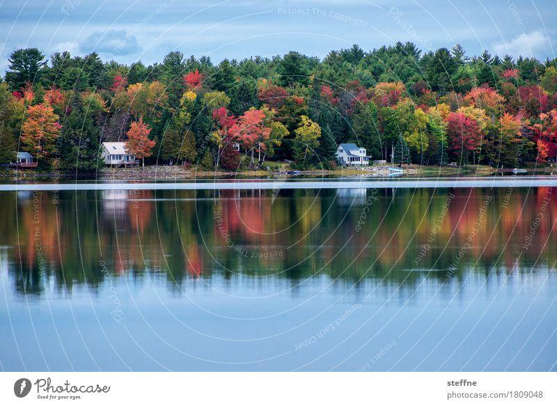 paradiesisch Natur Landschaft Wald Herbst Idylle ästhetisch USA Seeufer Indian Summer Maine Neuengland