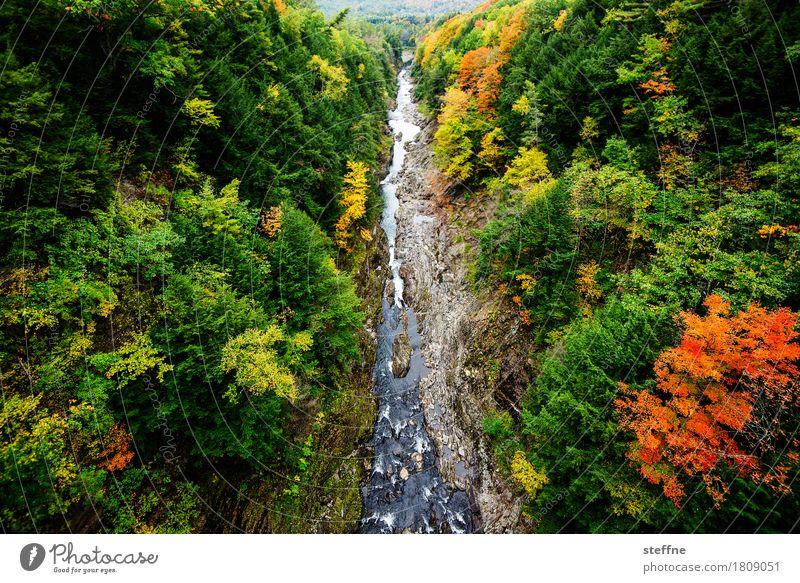 Natur I Baum Landschaft Wald Herbst außergewöhnlich ästhetisch Schlucht Färbung Indian Summer Neuengland