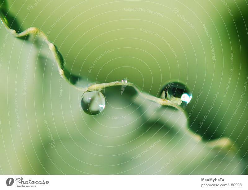 Natur Wasser Sonne Pflanze Sommer Herbst Makroaufnahme Park Kunst Wassertropfen Urelemente