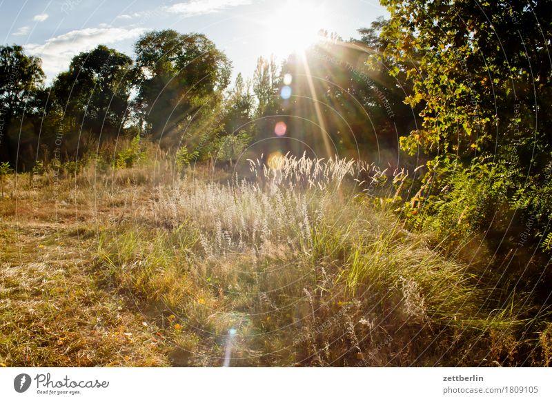 Wiese im Herbst Ast Baum Blühend Blume Blüte Erholung Ferien & Urlaub & Reisen Gegenlicht Gras Herbstlaub Himmel Blatt Licht Waldlichtung Natur Pflanze Rasen