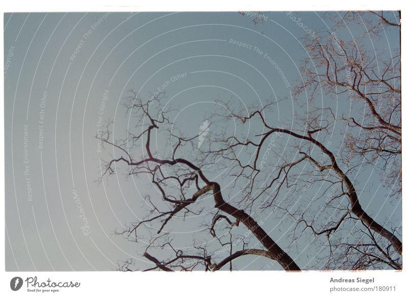 Gelebt. Himmel Natur alt Baum Umwelt Tod Leben Klima trist Vergänglichkeit Ast Schönes Wetter trocken analog Baumkrone Umweltschutz