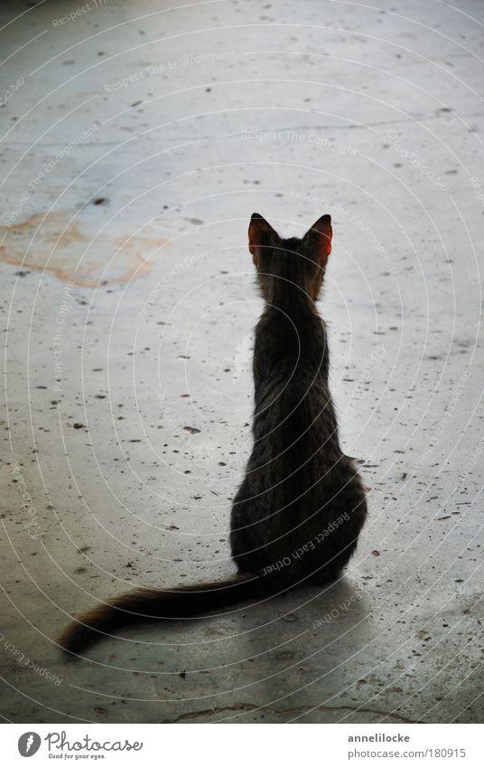 warten ... Katze Tier Einsamkeit Straße grau Traurigkeit träumen sitzen wild Beton Bodenbelag Hoffnung Trauer Ohr dünn
