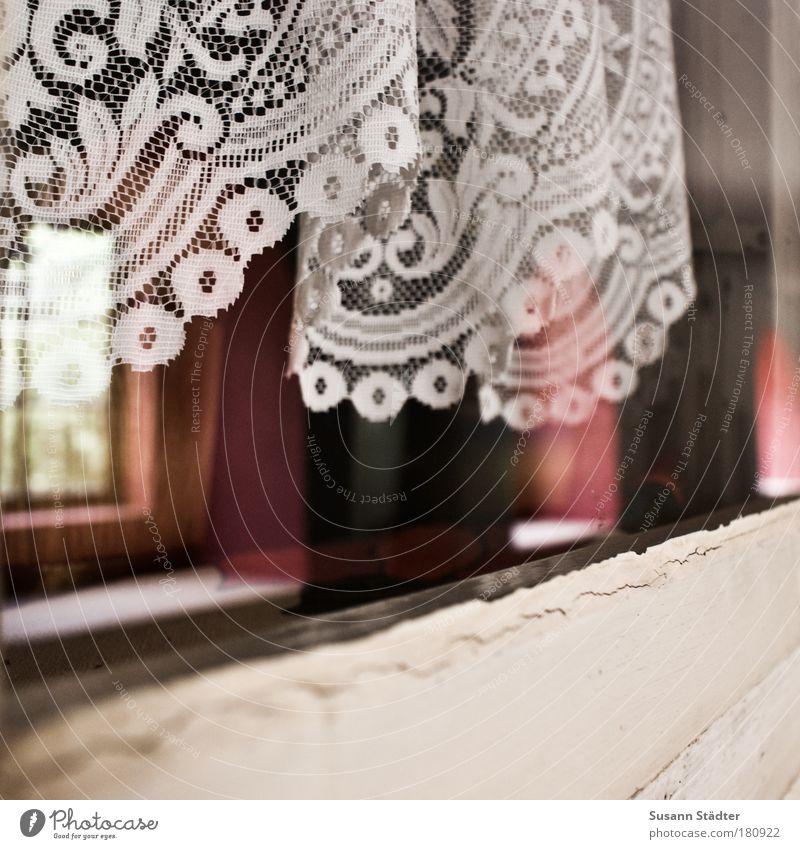 Am Kloster 23 Sonne Haus Fenster Holz träumen rosa glänzend Häusliches Leben retro Denkmal Spitze Gardine verblüht Reflexion & Spiegelung Mecklenburg-Vorpommern
