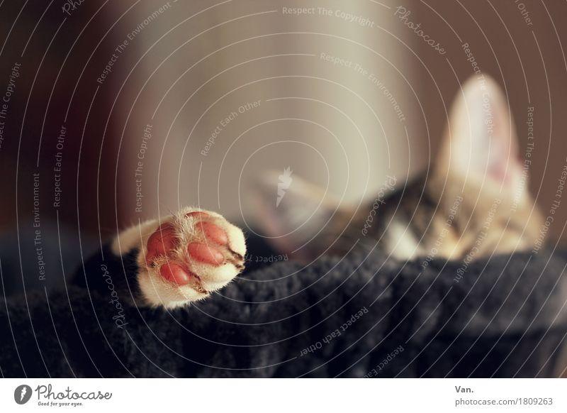 *500* relax Tier Haustier Katze Fell Pfote 1 schwarz Kratzbaum Farbfoto Gedeckte Farben Innenaufnahme Detailaufnahme Menschenleer Tag Schwache Tiefenschärfe