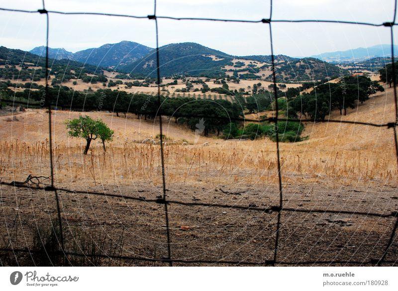 prisoner Himmel Natur Baum Pflanze Sommer Einsamkeit Ferne Wald Umwelt Landschaft Gefühle Berge u. Gebirge Gras Stimmung Horizont Zufriedenheit