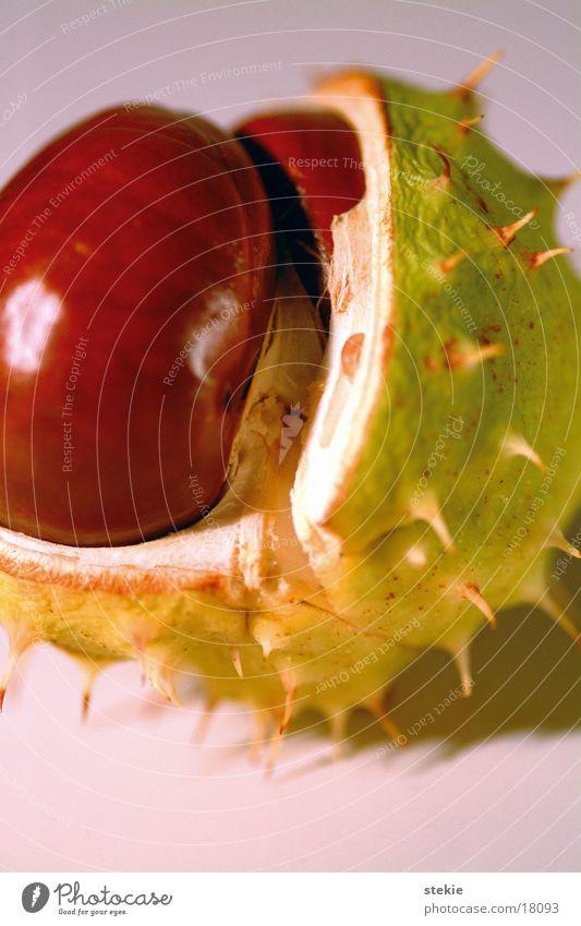 Kastanie braun grün nah Herbst Kastanienbaum Stachel wegfahren Makroaufnahme Rosskastanie Ungenießbar pieksen