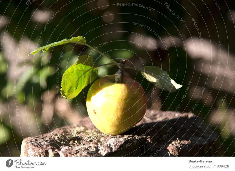 Der Apfel fällt Natur grün Gesunde Ernährung gelb Essen Lifestyle Gesundheit Garten Lebensmittel Stein Frucht frisch ästhetisch süß einzeln