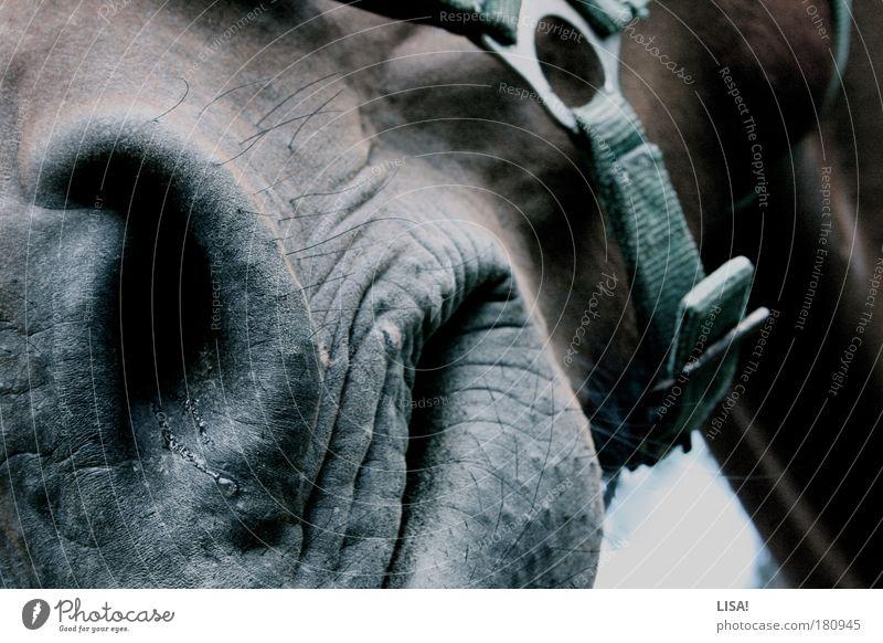 meine nüster läuft Farbfoto Gedeckte Farben Außenaufnahme Nahaufnahme Detailaufnahme Menschenleer Tag Licht Schatten Kontrast Tier Haustier Nutztier Pferd