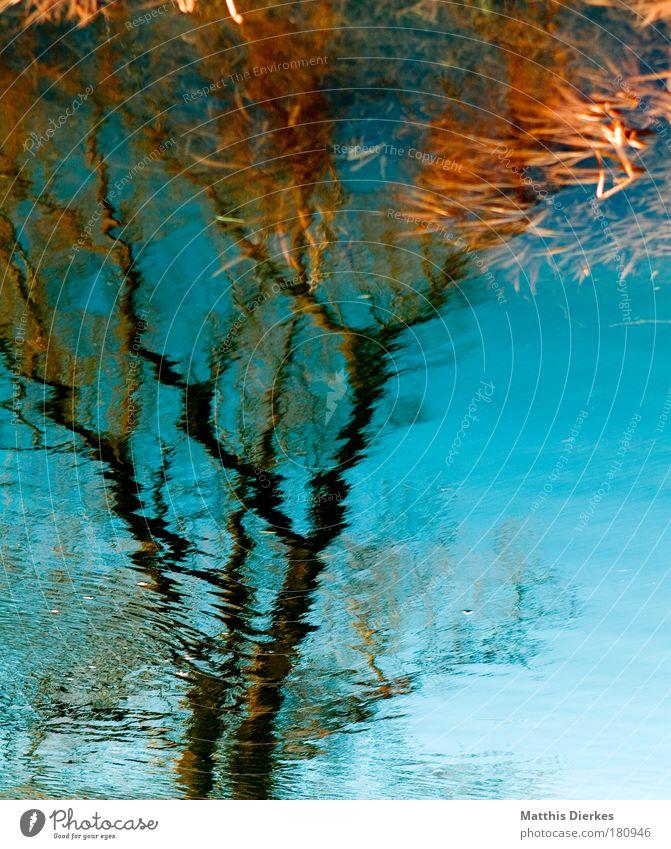 Baum Wasser Fluss Reflexion & Spiegelung Ast Unschärfe unklar Flussufer böschung Surrealismus falsch Natur Eindruck Grundbesitz ländlich Gewässer Geplätscher