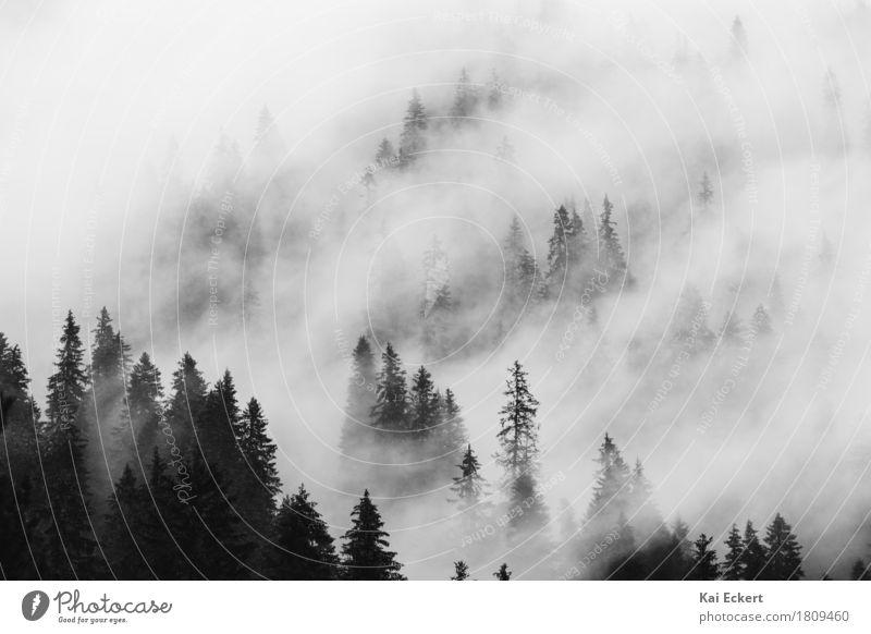Berge, Wald und Nebel IV Landschaft Pflanze Wolken Wetter Baum Alpen Berge u. Gebirge friedlich ruhig Sehnsucht Einsamkeit Abenteuer Zufriedenheit Freiheit
