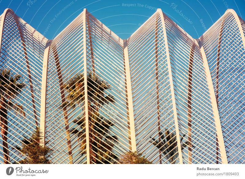 Schöne Palmen im Gewächshaus Design exotisch Sommer Garten Kunst Architektur Umwelt Natur Landschaft Pflanze Himmel Baum Blatt Grünpflanze Park Stadt