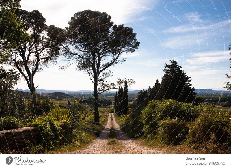 Pinien, Weg, Bäume Ferien & Urlaub & Reisen Tourismus Ferne Sommer wandern Landschaft Himmel Wolken Horizont Sonne Schönes Wetter Baum Sträucher Park