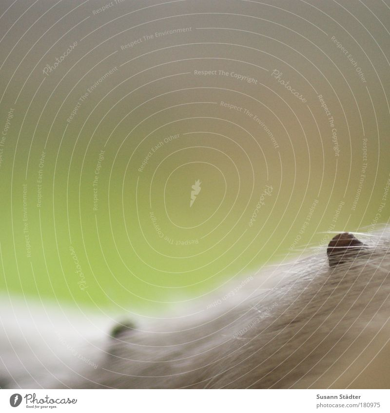 Nipplegate Hund Tierjunges ästhetisch Fell Bildausschnitt Anschnitt Zitze Vor hellem Hintergrund