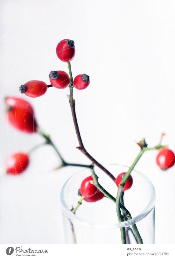 Hagebuttenzweige Lifestyle Stil Design Leben harmonisch Wohnung Dekoration & Verzierung Umwelt Natur Herbst Pflanze Beeren Frucht Vase Gefäße Glas Bewegung