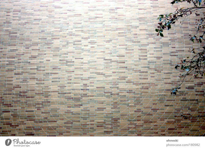 Vogelbeere Natur Baum Pflanze Blatt Haus Wand Stein Mauer Gebäude Umwelt Fassade Wachstum Bauwerk Zeit Textfreiraum Vogelbeeren