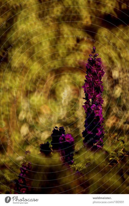 Neulich im Park Farbfoto mehrfarbig Außenaufnahme Experiment abstrakt Menschenleer Unschärfe Schwache Tiefenschärfe Pflanze Sommer Blume Erholung ästhetisch