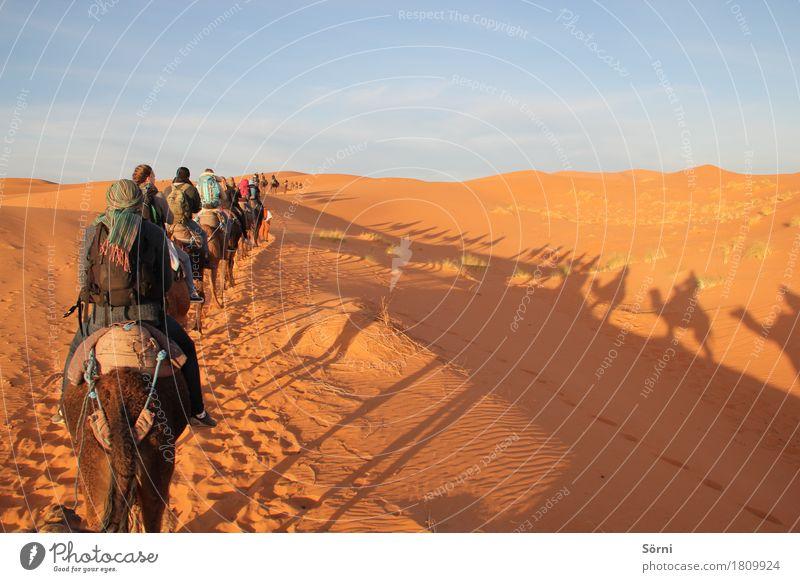 Karamelkavane exotisch Ferien & Urlaub & Reisen Tourismus Ausflug Abenteuer Ferne Freiheit Expedition Sand Wüste Düne Tier Kamel schaukeln lang Karavane