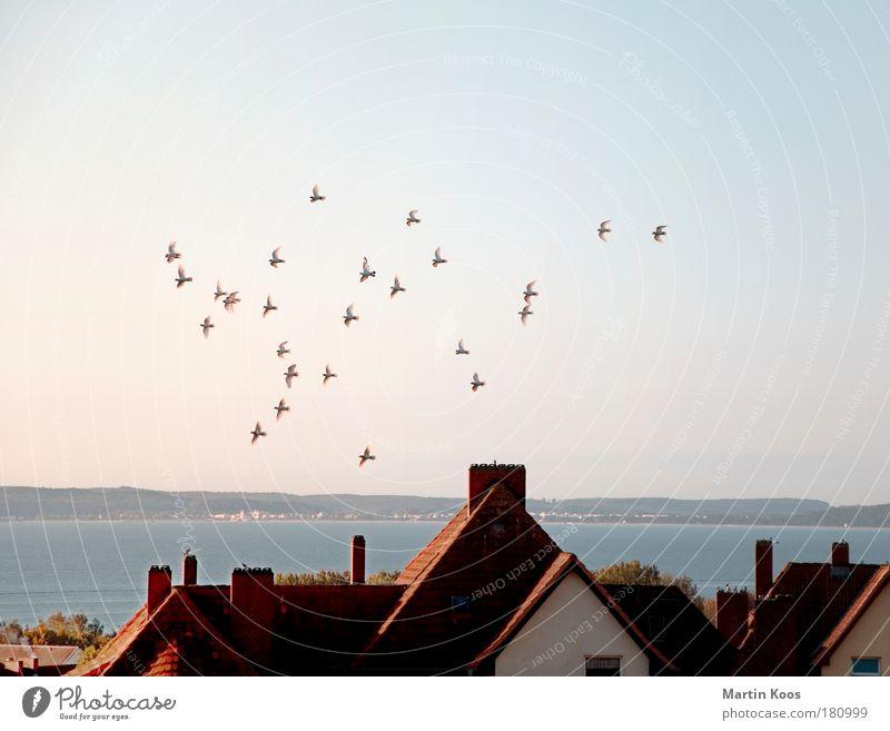 kurzstreckenzieher Ferne Meer Insel Tier Vogel Tiergruppe Schwarm fliegen Kommunizieren Ferien & Urlaub & Reisen ästhetisch Zusammensein Unendlichkeit kalt