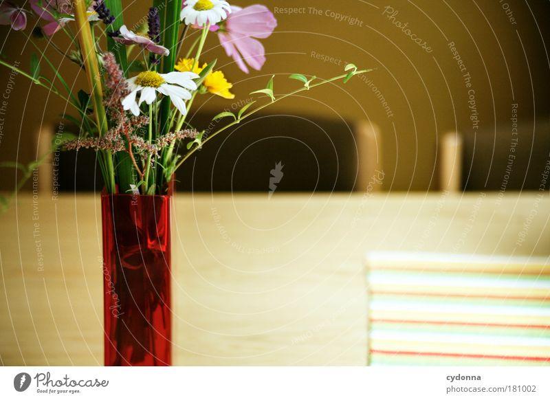 Ein Stück Natur schön Blume Pflanze ruhig Leben Glück träumen Zufriedenheit Raum Wohnung Tisch ästhetisch Stuhl Dekoration & Verzierung Bildung