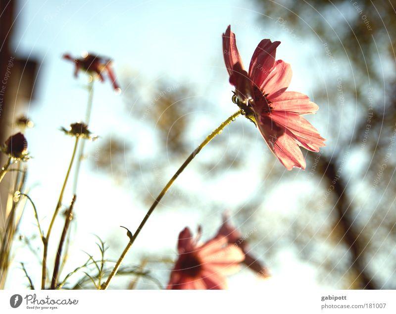 Pastell no.2 Gedeckte Farben Außenaufnahme Nahaufnahme Menschenleer Tag Sonnenlicht Gegenlicht Schwache Tiefenschärfe Natur Landschaft Pflanze Himmel Sommer