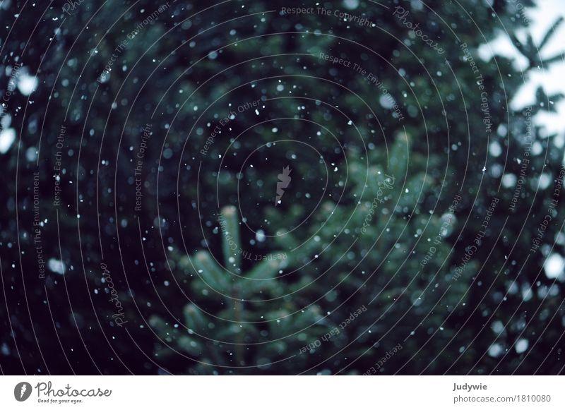 Planeten und Sterne aus Schnee Umwelt Natur Pflanze Winter Eis Frost Schneefall Baum Tanne Weihnachtsbaum fallen fliegen dunkel kalt nass grün ruhig Einsamkeit