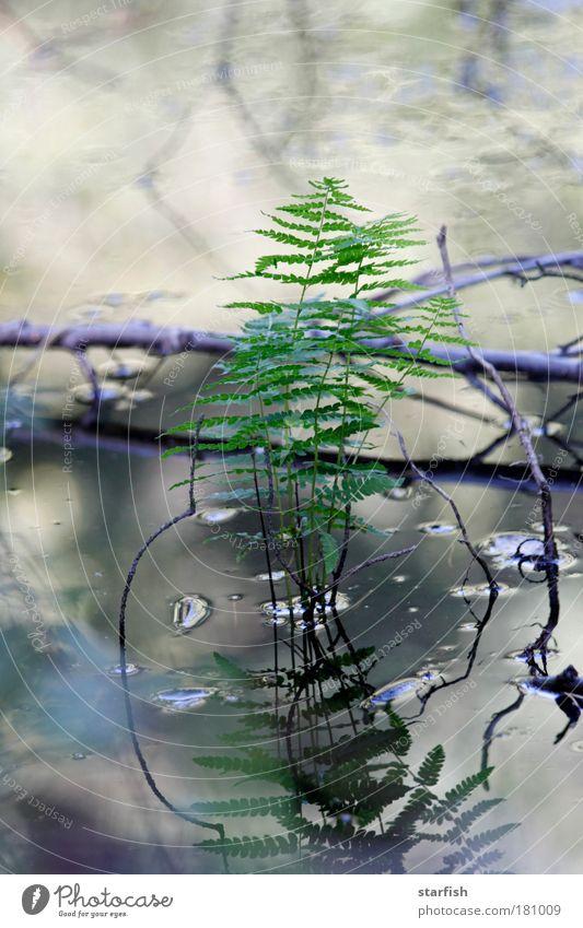 Spieglein, Spieglein... Natur Wasser grün blau Pflanze Blatt Herbst Frühling grau braun Wassertropfen trist nah einfach natürlich silber