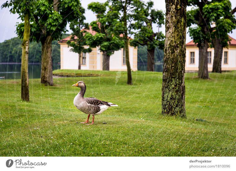 Ist das schon die St. Martins Gans? Natur Ferien & Urlaub & Reisen Baum Landschaft Tier Umwelt Frühling Gefühle Wiese See Vogel Tourismus Park Ausflug Wildtier