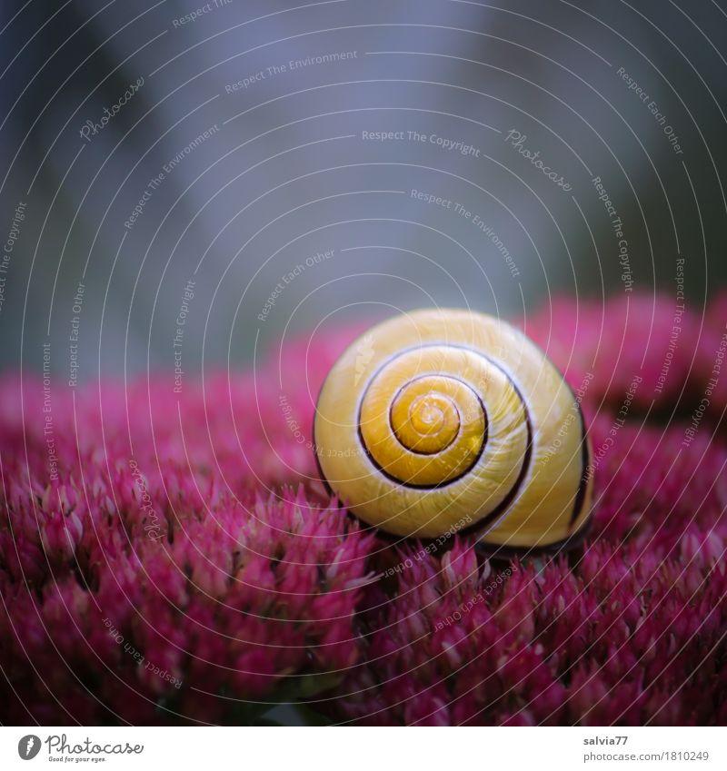 roter Teppich Natur Pflanze Farbe Sommer Blume Tier ruhig gelb Blüte Herbst Glück Garten grau Design Wildtier