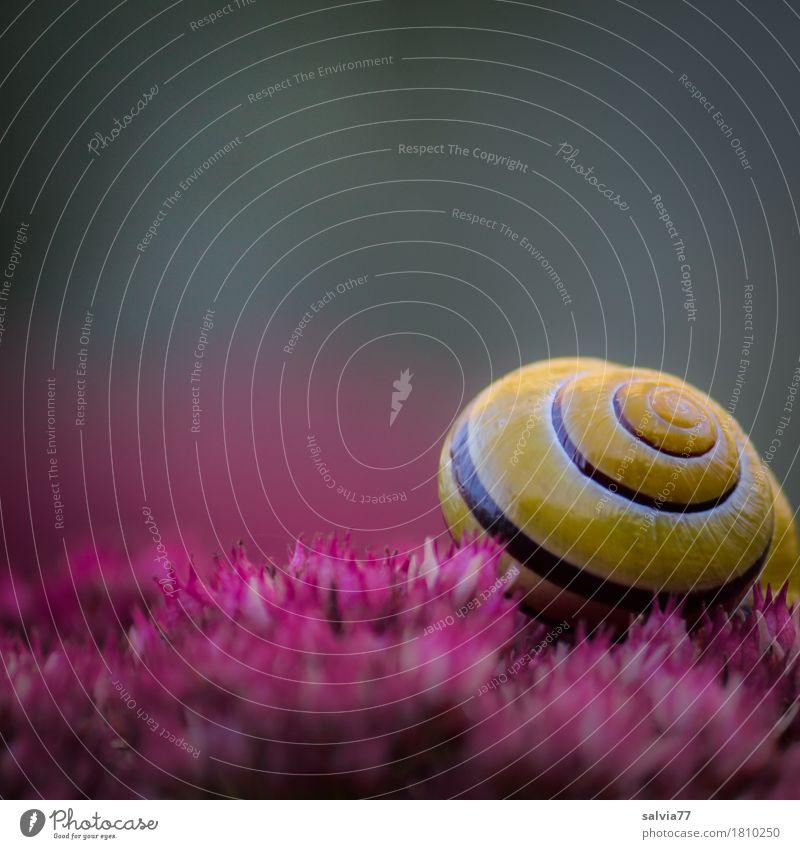 Duftkissen Natur Pflanze Farbe Blume Erholung Tier ruhig gelb Blüte Garten grau Design rosa Zufriedenheit Wildtier Blühend