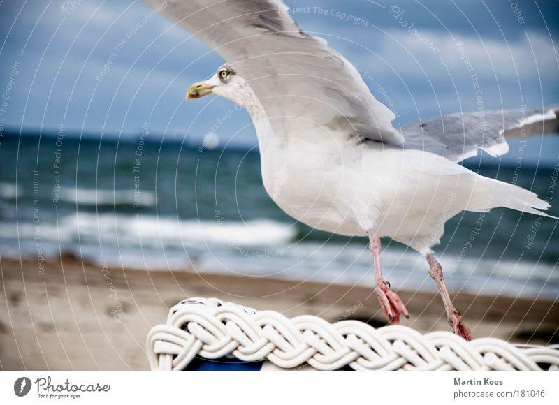 vogelperspektive Sommer Meer Strand Tier Herbst Fuß Küste Vogel Horizont fliegen ästhetisch Luftverkehr nah Flügel Nordsee Ostsee