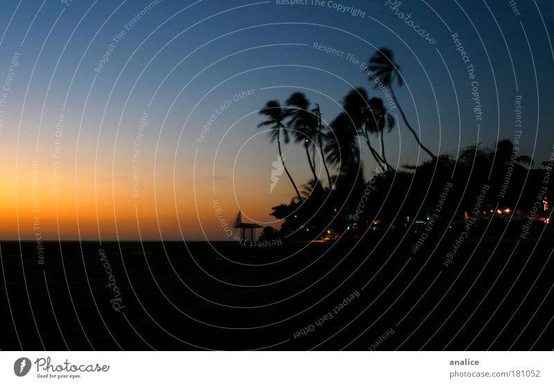 nach Sonnenuntergang Natur Pflanze Horizont Sonnenaufgang Wind Wärme Baum Küste Jericoacoara Brasilien Dorf Kleinstadt blau gelb schwarz Erholung