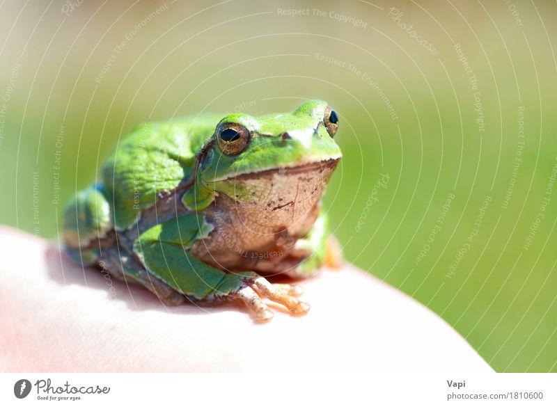 Natur Farbe Sommer grün weiß Einsamkeit Tier Gesicht Auge Umwelt gelb natürlich Gras klein Denken springen