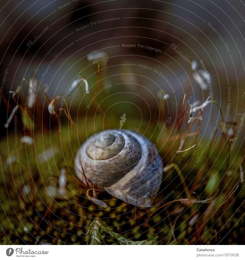 Zu vermieten Natur Pflanze grün schön Tier Herbst Familie & Verwandtschaft Garten grau braun Vergänglichkeit Wandel & Veränderung violett Verfall Moos Schnecke