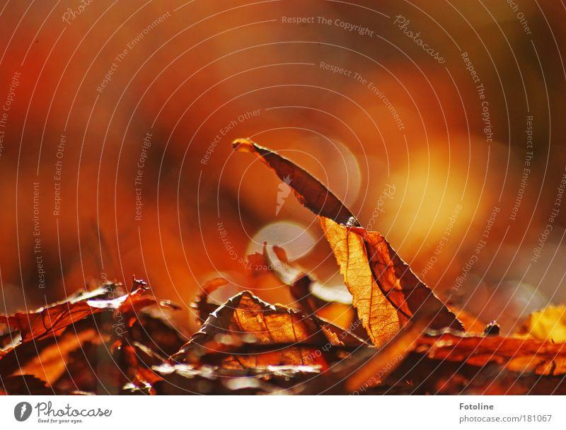 Herbstleuchten Farbfoto mehrfarbig Außenaufnahme Textfreiraum links Textfreiraum rechts Textfreiraum oben Tag Lichterscheinung Sonnenlicht Unschärfe Umwelt