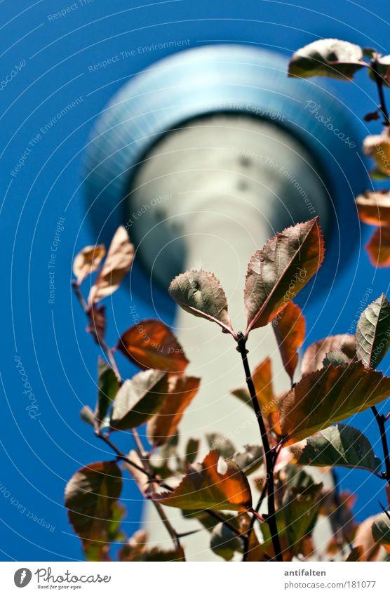 Herbstaussichten II Himmel blau Baum rot Blatt Herbst Architektur Deutschland gold hoch Platz groß Tourismus Macht Sträucher